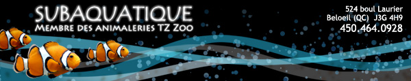Subaquatique - Beloeil EnTete_Abrizo